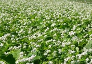 Cover photo for 2020 Cover Crop Survey Reveals Benefits