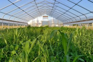 Vegetable greenhouse production