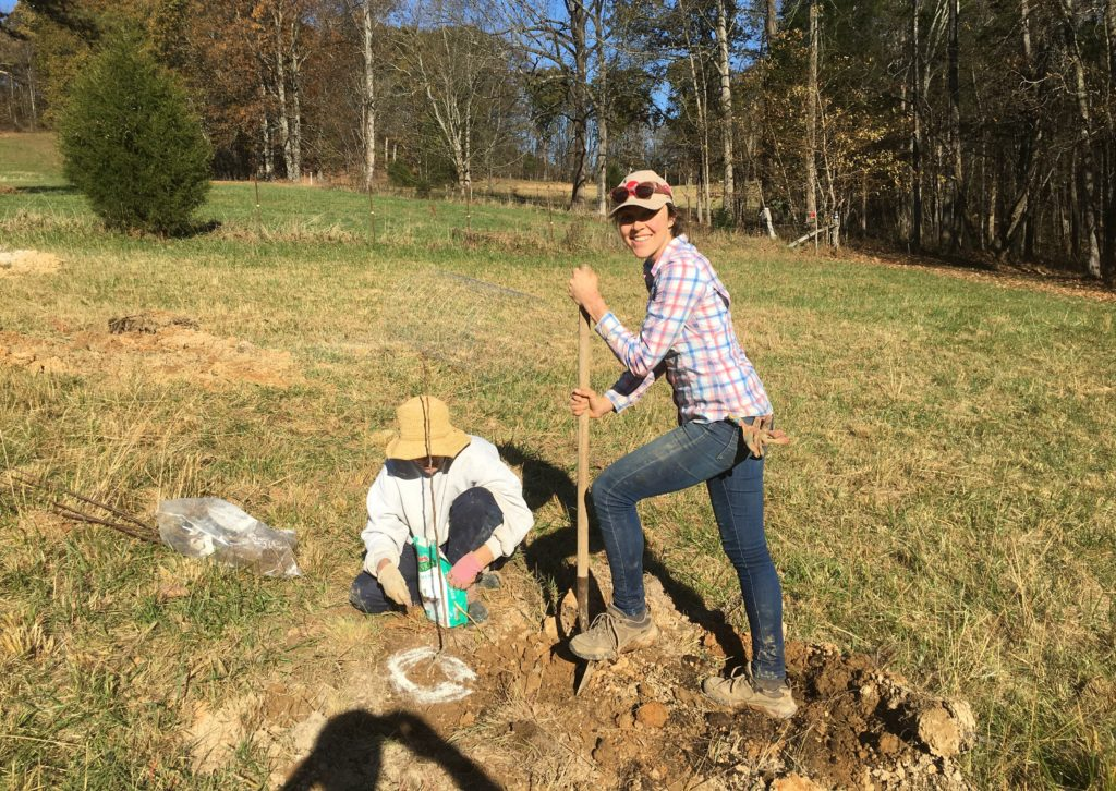 planting apple trees on my farm