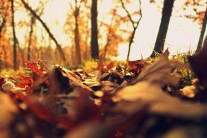 Cover photo for Yadkin County 4-H November Newsletter!