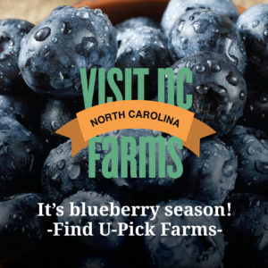 Cover photo for Blueberry Season Is a Burstin'
