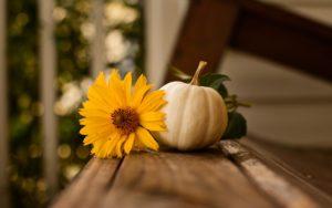 Cover photo for Yadkin County 4-H November Newsletter