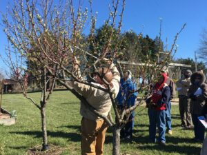 Cover photo for Tree Fruit Pruning With Dr. Mike Parker - March 4, 2021