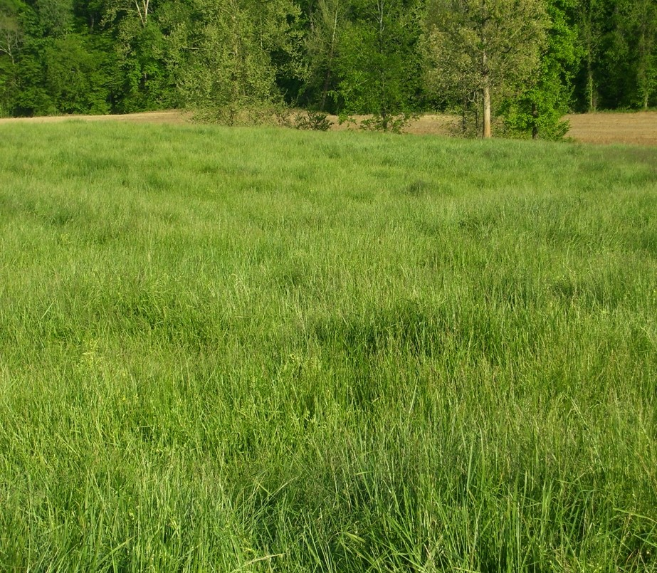 Pasture and Hay Land